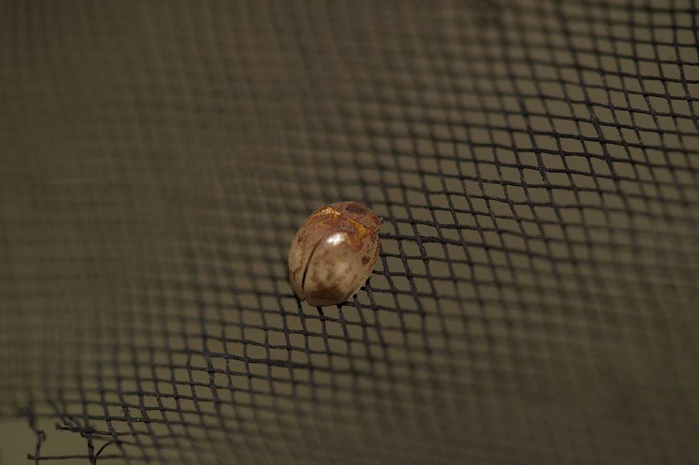 私設昆虫記-118 生と死の差分 天道虫_f0215695_10515053.jpg
