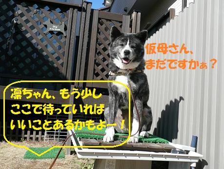 f0121712_1161551.jpg