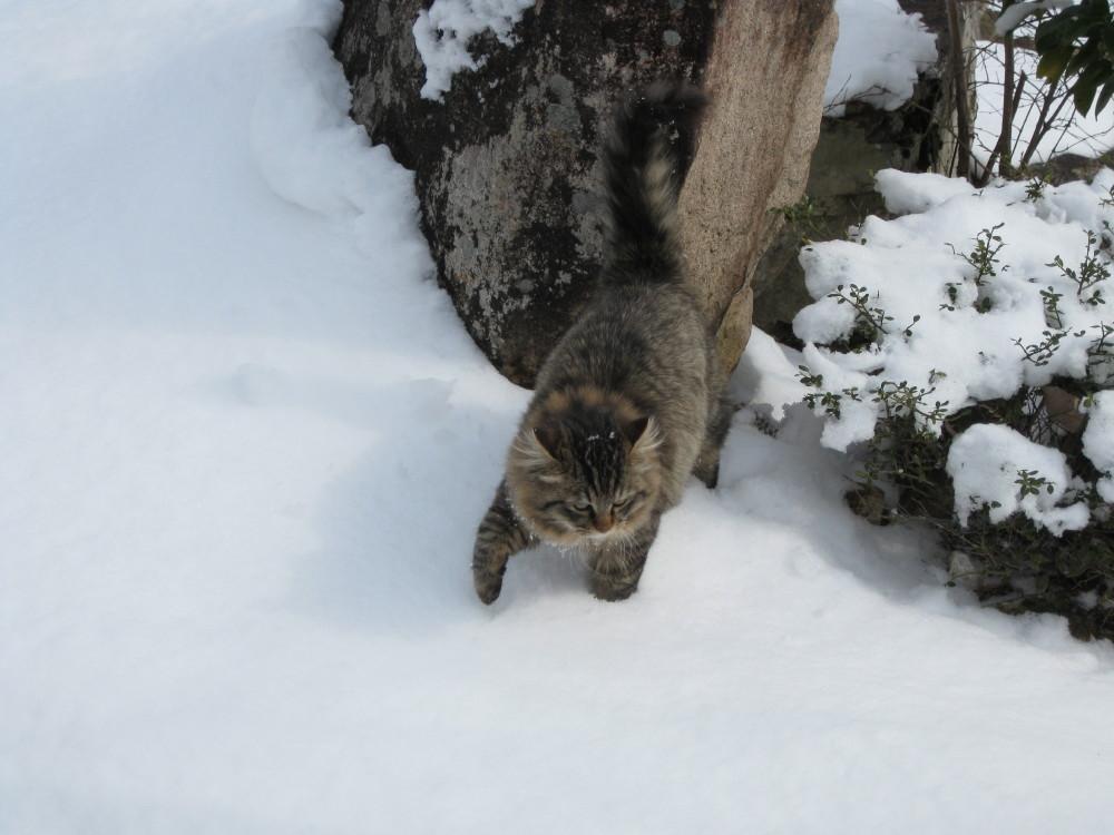 まだまだ雪の中_c0218213_14114768.jpg