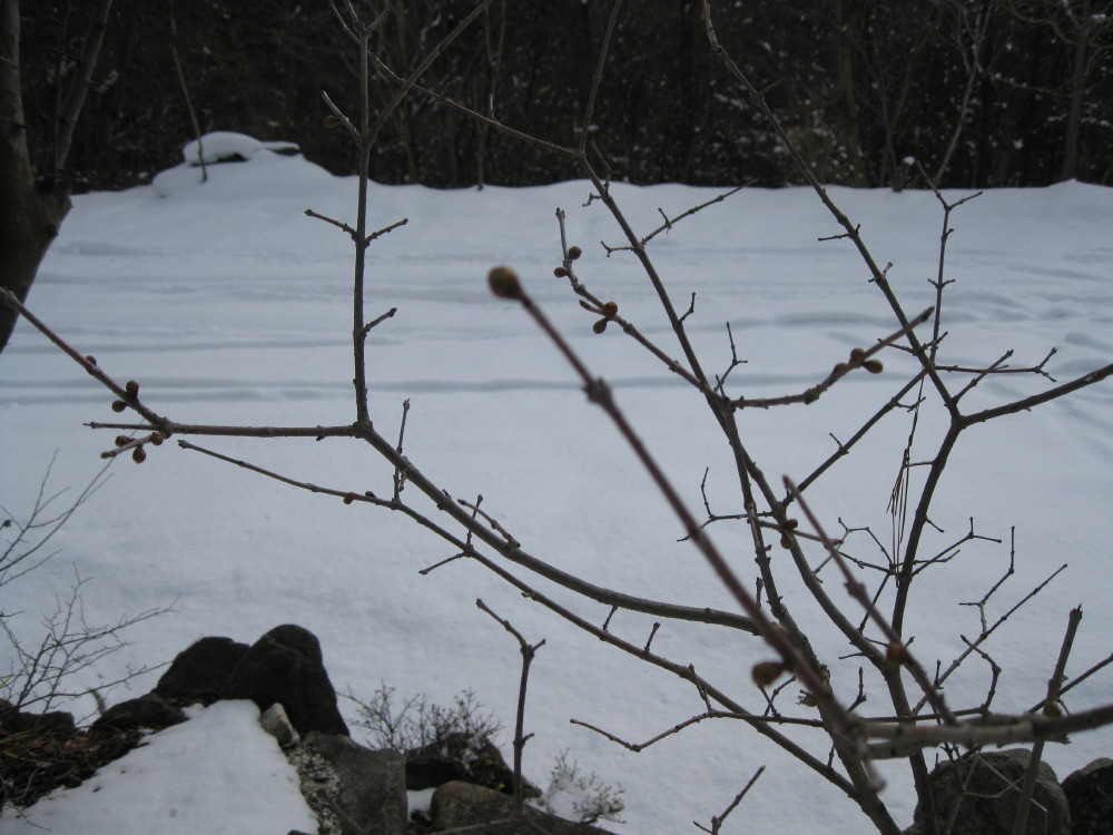 まだまだ雪の中_c0218213_14115616.jpg