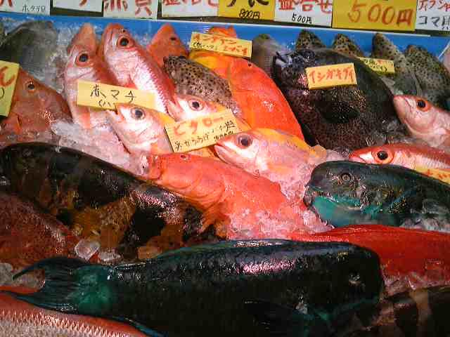 魚やさん_e0202518_11404721.jpg