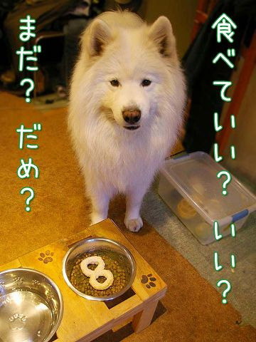 誕生日ごはん(完結編)_c0062832_1312776.jpg