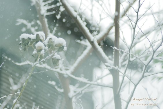 冷え冷え_d0147742_23534794.jpg