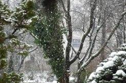 ある雪の日_e0195766_4212242.jpg