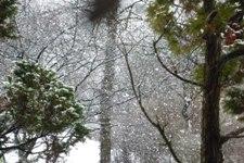 ある雪の日_e0195766_4222069.jpg