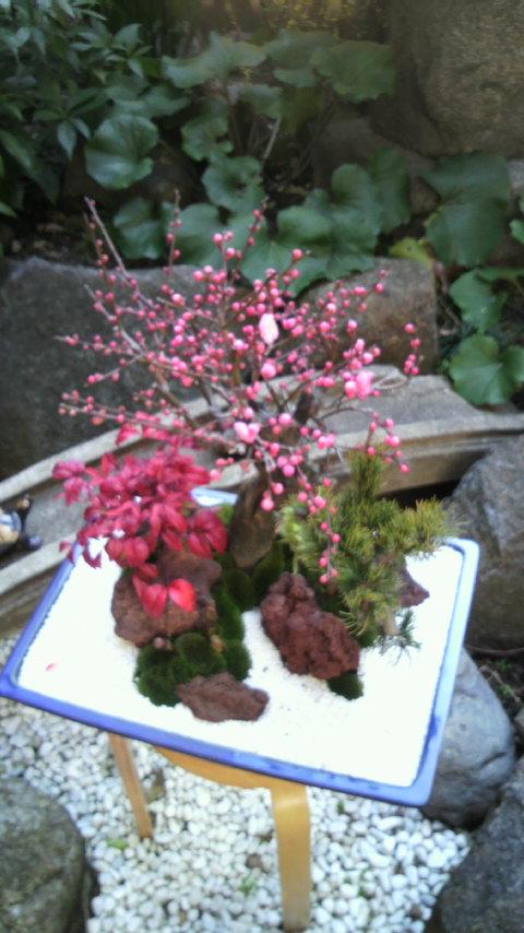梅が咲きました。_f0052181_20441259.jpg