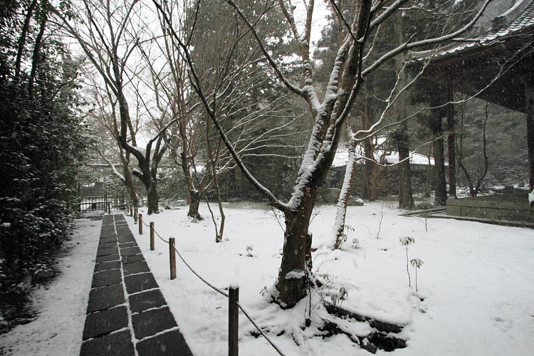 雪の蓮華寺_e0051888_2184843.jpg