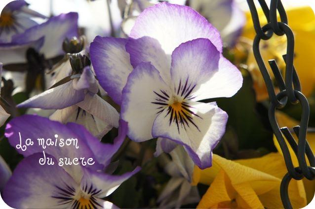 b0179591_9473419.jpg