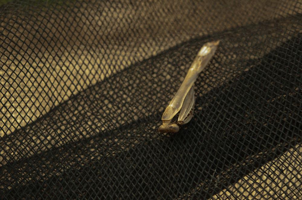 私設昆虫記-119 生と死の差分 かまきり_f0215695_1452061.jpg