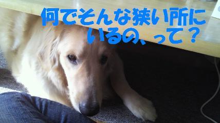 b0206300_1428017.jpg