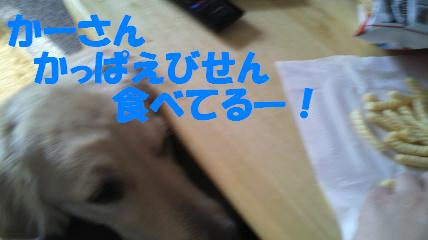 b0206300_14293894.jpg