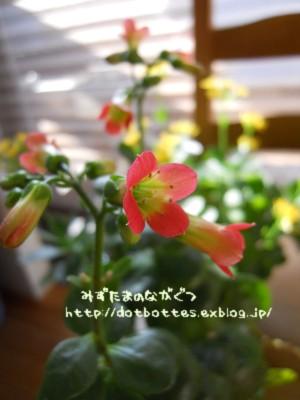 d0170109_12232580.jpg