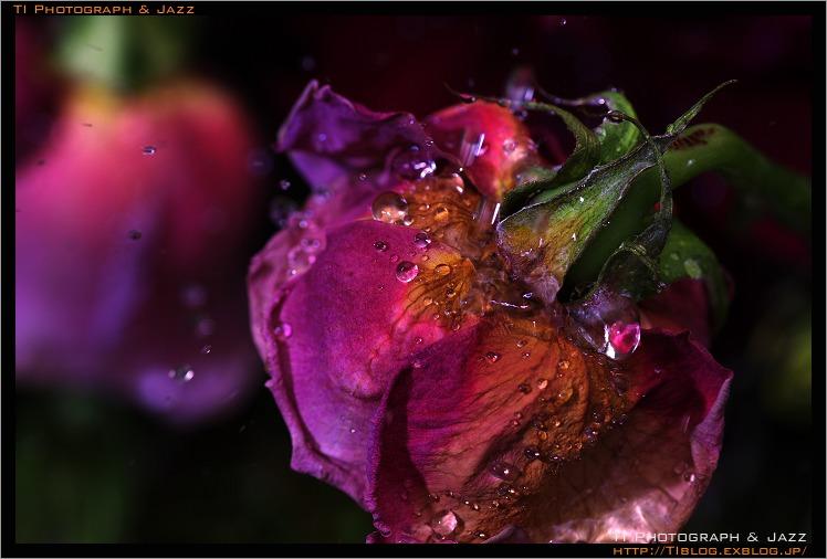 b0134013_182380.jpg