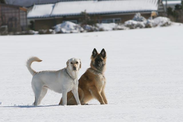 初雪遊び_e0192921_2137138.jpg