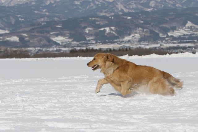 初雪遊び_e0192921_2137183.jpg