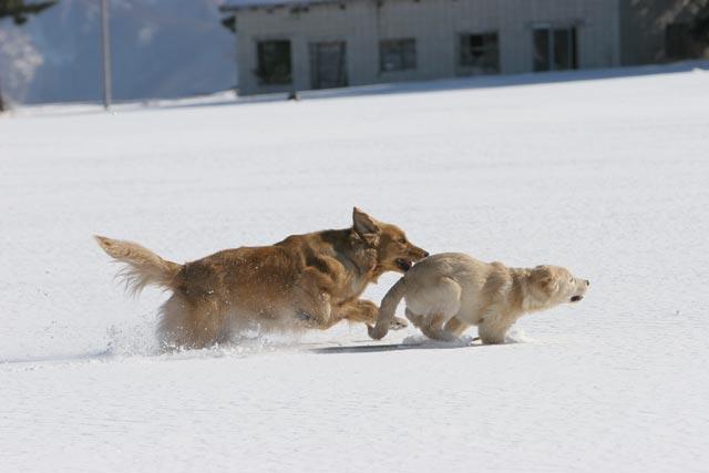 初雪遊び_e0192921_213795.jpg
