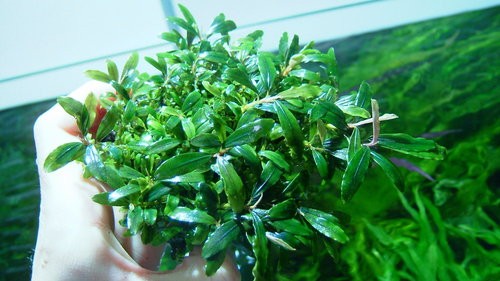 cultivation_e0177832_0291099.jpg