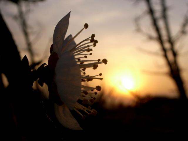 春よ、はやく来い!_d0113340_1757356.jpg