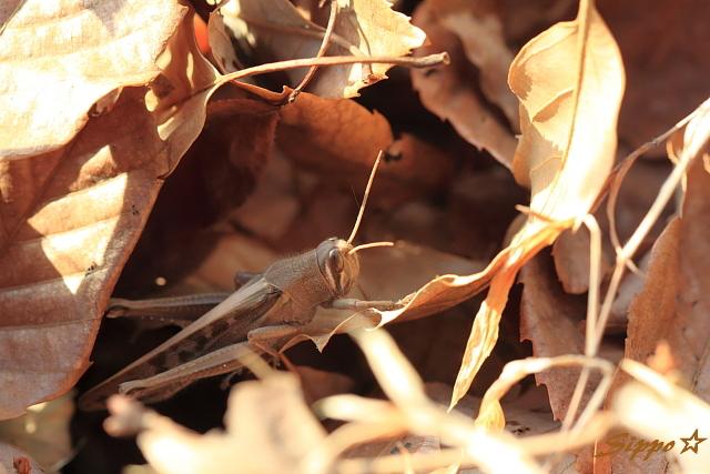 ■■ 枯れ葉は毛布 ■■_c0195662_23471358.jpg