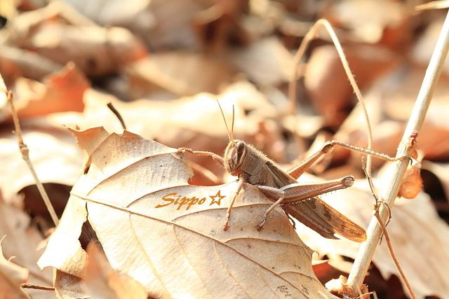 ■■ 枯れ葉は毛布 ■■_c0195662_23472757.jpg