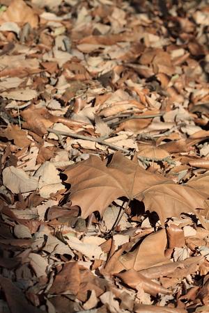 ■■ 枯れ葉は毛布 ■■_c0195662_23474140.jpg