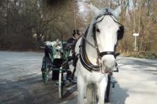 Englischer Garten エングリッシャーガルテン_e0195766_032357.jpg