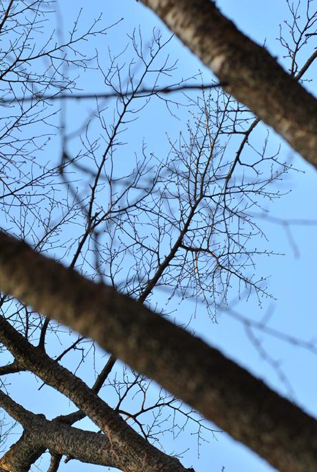 森の精霊_b0194880_21591681.jpg