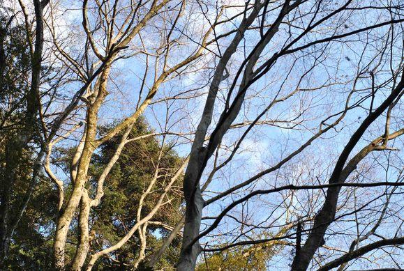 森の精霊_b0194880_21594290.jpg