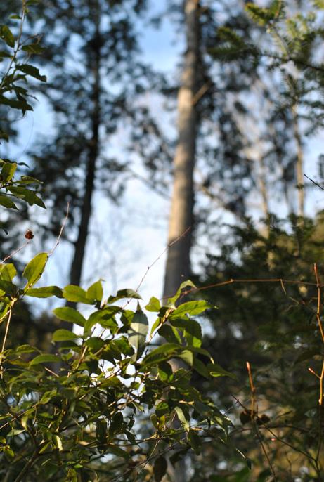 森の精霊_b0194880_21595335.jpg