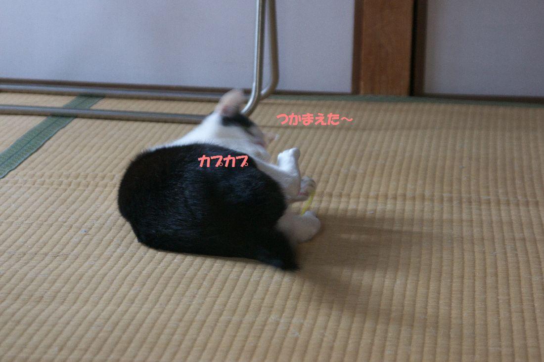 f0197682_23201351.jpg
