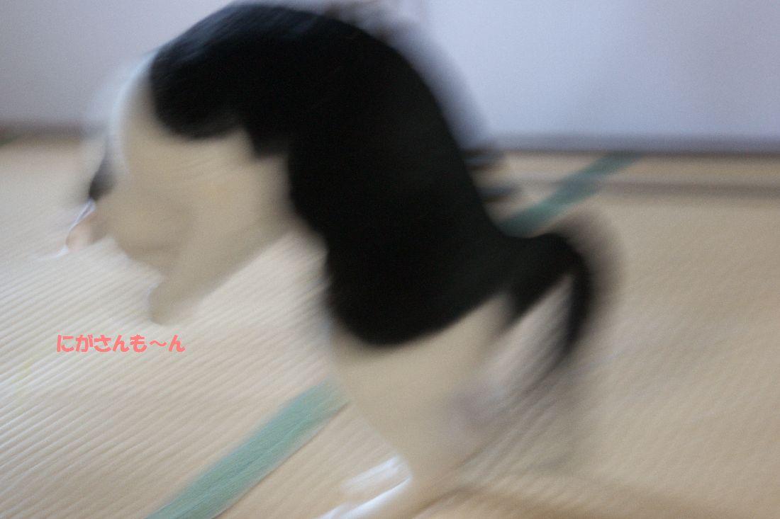 f0197682_23202413.jpg