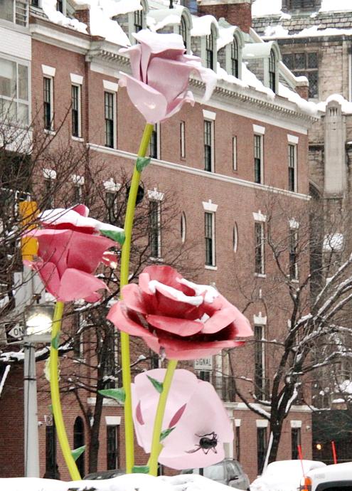 """NYのパーク・アベニューに大きなバラのパブリック・アート、""""The Roses""""展示中_b0007805_15302434.jpg"""