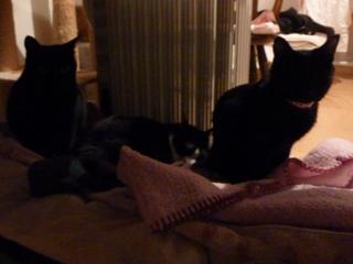 黒まるまるまる猫 空のぇるろった編。_a0143140_23131587.jpg