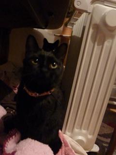 黒まるまるまる猫 空のぇるろった編。_a0143140_2373680.jpg