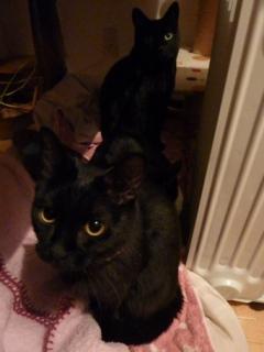 黒まるまるまる猫 空のぇるろった編。_a0143140_2384156.jpg