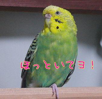 f0196665_0285249.jpg