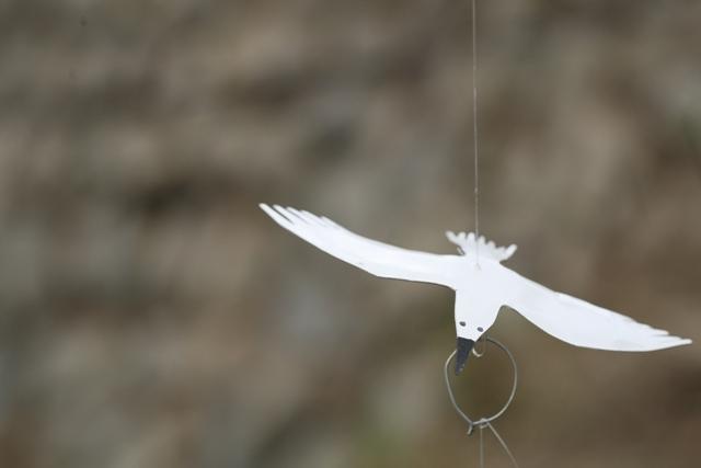 幸せの白い鳥プロジェクト in イフガオ 「原始の森にホワイト・バードが戻ってきた日」_b0128901_1358862.jpg