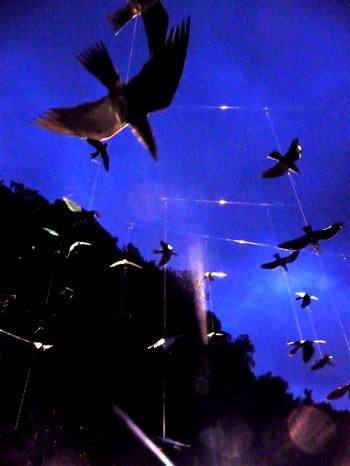 幸せの白い鳥プロジェクト in イフガオ 「原始の森にホワイト・バードが戻ってきた日」_b0128901_143037.jpg