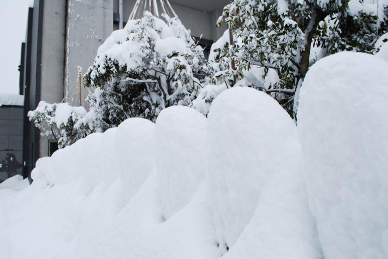 大雪!_f0067122_18205949.jpg