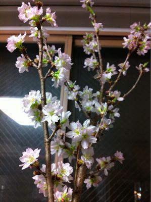 桜_e0052534_17312273.jpg