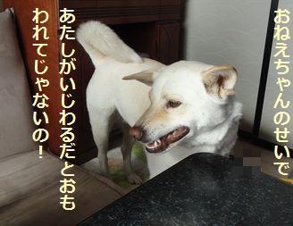 f0195543_2395644.jpg
