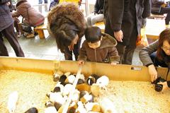 吉祥寺に行きましたPart1 井の頭自然文化園_a0186568_22335153.jpg