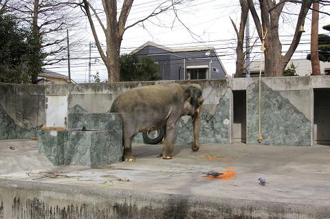 吉祥寺に行きましたPart1 井の頭自然文化園_a0186568_22443117.jpg