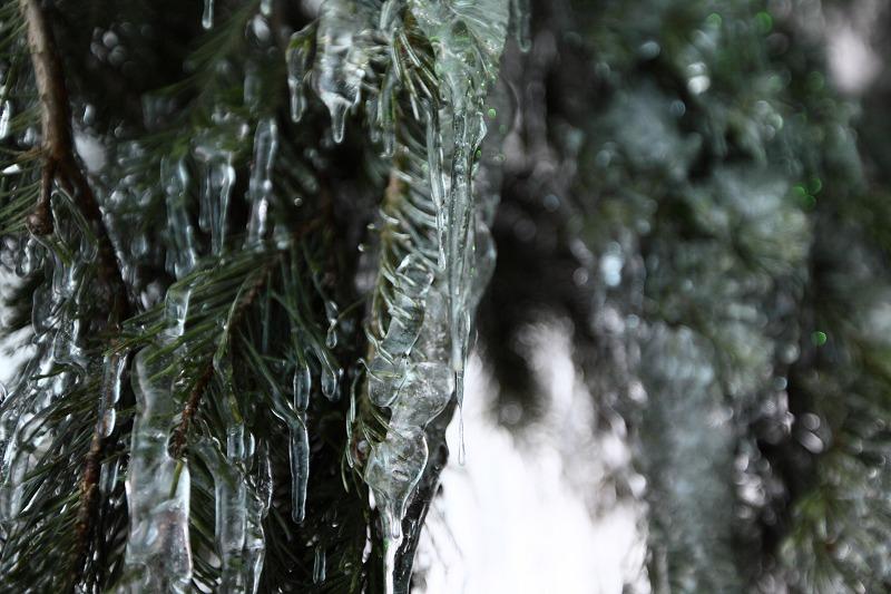 1/28 あいにくのくもり空だが 氷濤は前よりいい出来 綺麗 _a0160581_2133038.jpg