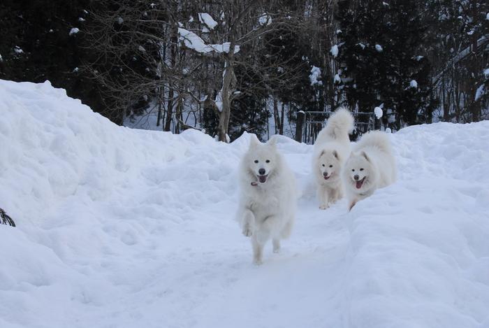 豪雪地方でランチ。_a0049296_19545827.jpg