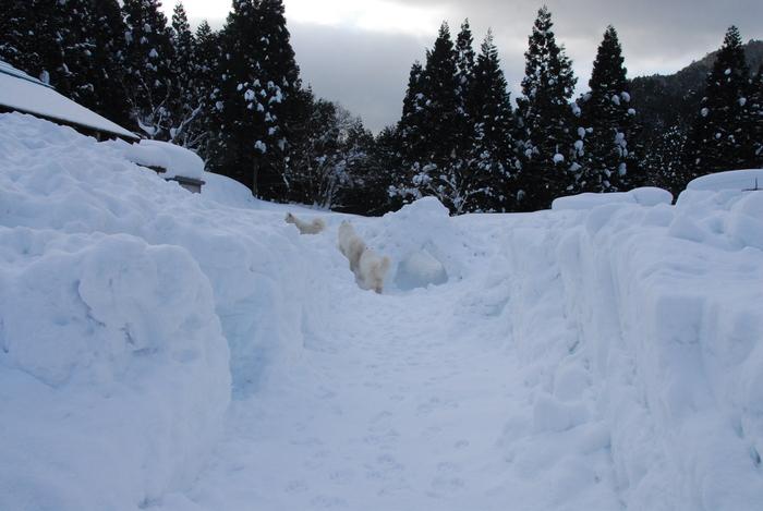 豪雪地方でランチ。_a0049296_19562726.jpg