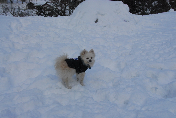 豪雪地方でランチ。_a0049296_2029146.jpg