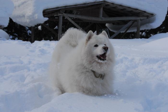 豪雪地方でランチ。_a0049296_2030537.jpg