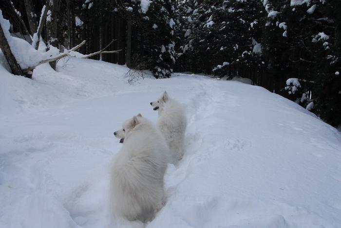豪雪地方でランチ。_a0049296_20313698.jpg