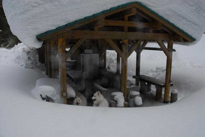 豪雪地方でランチ。_a0049296_20325999.jpg